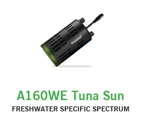 Kessil 160 Tuna Sun
