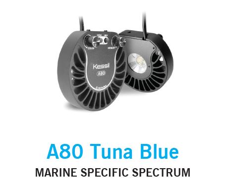 Kessil A80 Tuna Blue