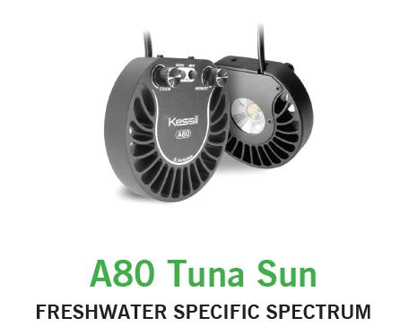 Kessil a80 Tuna Sun