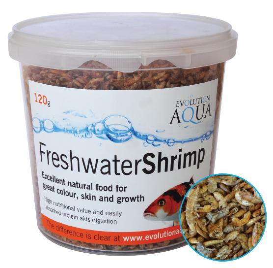 Freshwater Shrimp