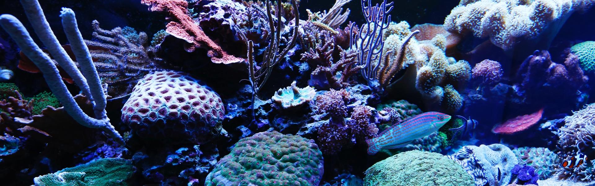 EA Aquariums