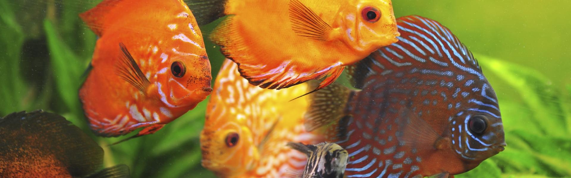 Aquarium EvoUV